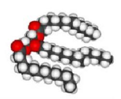 Клетка Триглицерида