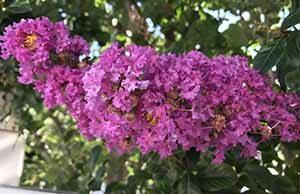 Навруз - праздник Весны.