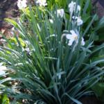 Навруз – праздник Весны.