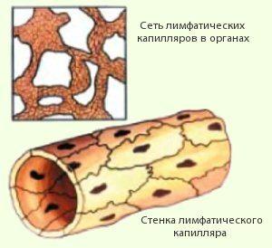 Лимфатический капилляр