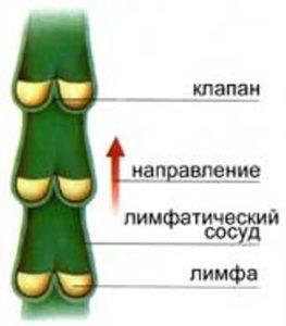 Лимфатический сосуд