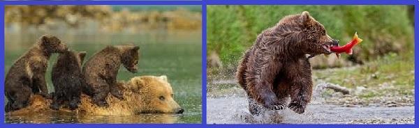 Медведи на Катмае