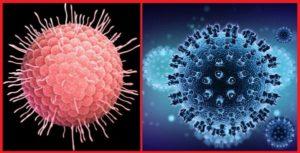 Зостер - вирус герпеса