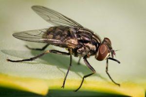 Осенняя муха жигалка