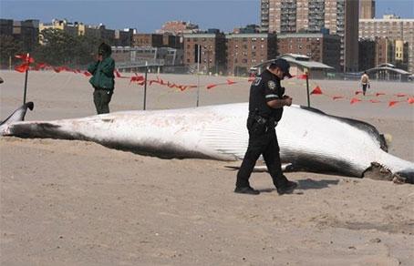 Акула, выброшеная на пляж