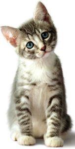 Фотография котёнка