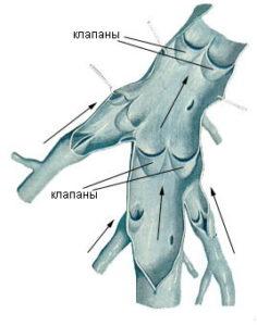 Устройство поллунных венозных клапанов