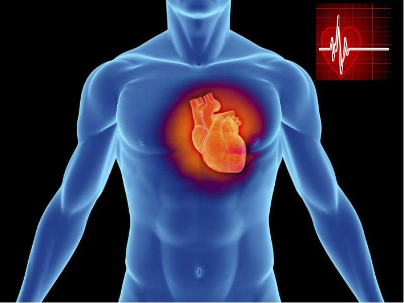 Сердце человека – мотор жизни.