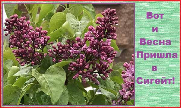 Открытка - коллаж Вот и пришла весна в Сигейт