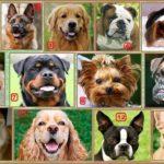 История собак Америки