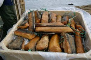 Хаукарль - тухлое мясо гренландской полярной акулы